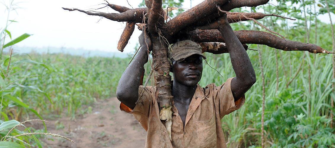 Nigeria's top biotech regulator says nation needs GMOs for 'socioeconomic survival'