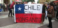 Chile's GMO schizophrenia: It exports seeds and imports crops, but doesn't allow cultivation