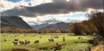 New Zealand would benefit from GMO-organic co-existence