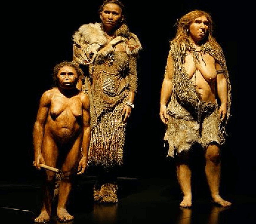 did our human ancestors wipe out the human hobbits genetic