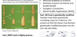 American Council on Science and Health fact sheet in response to GMO, biotechnology critics