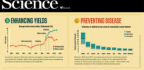 Infographic: Enhancing yields, preventing disease