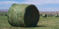 GMO alfalfa has higher yields than conventional, according to USDA survey