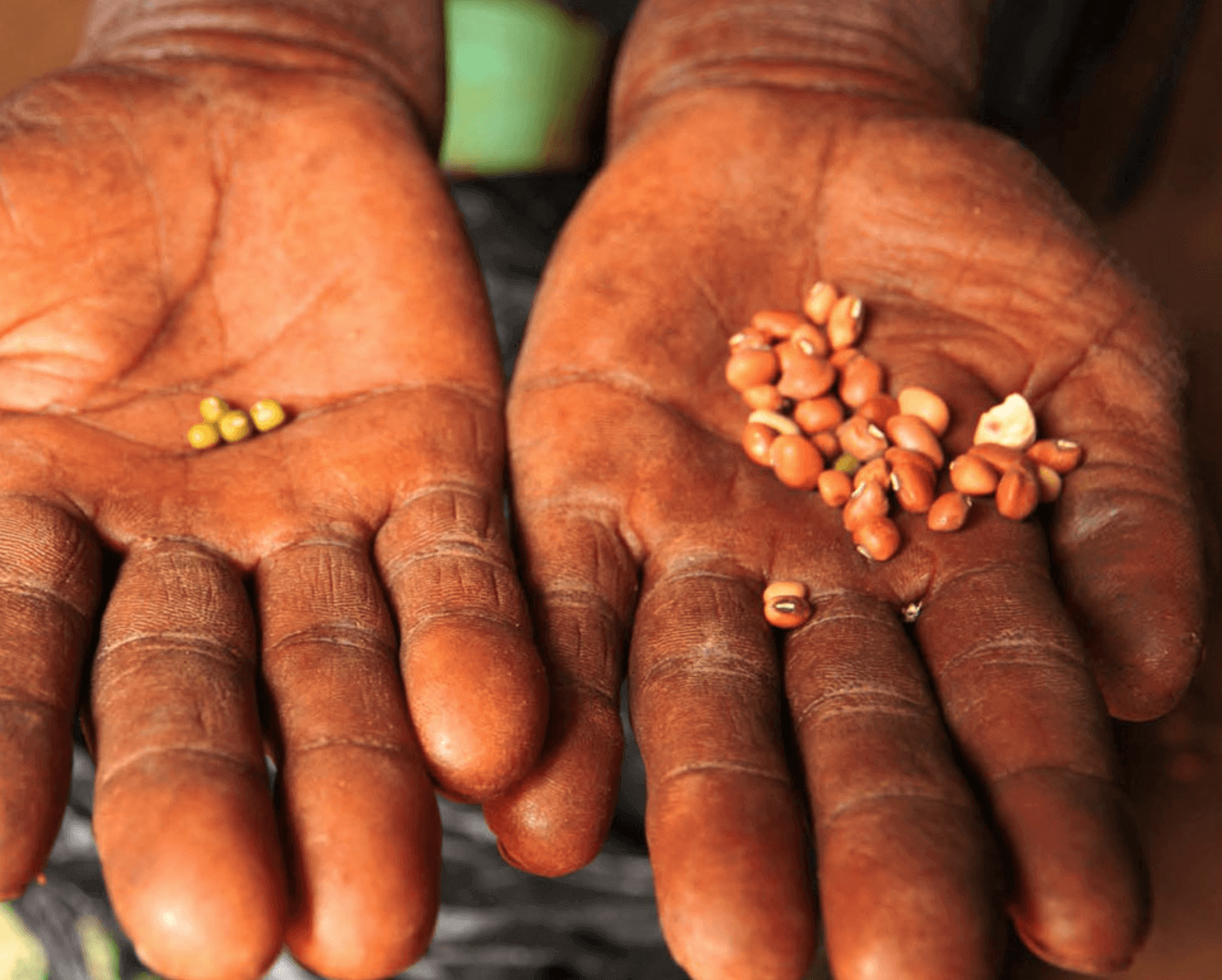 Viewpoint: Why saving seeds is an unproductive farming practice that locks in poverty