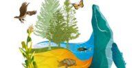 UN Biodiversity Conference: Anti-technology NGOs aim to block gene drive, CRISPR, synthetic biology
