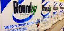 Glyphosate-based Roundup herbicide linked to liver disease in rats? Researcher Séralini under fire again