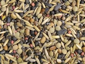 CC blend seed closeup x