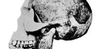 Figure Piltdown fossil large