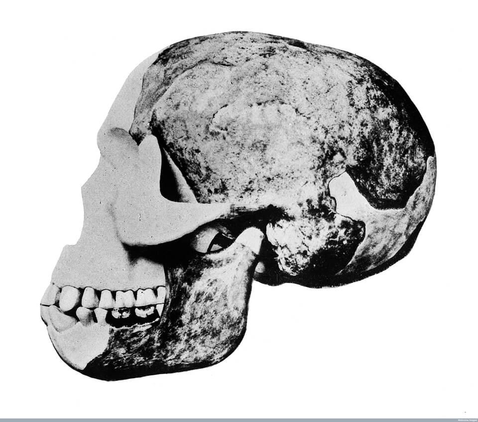 Fluorine dating piltdown man skull