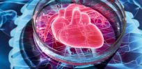'Hearts-in-a-dish': Gene editing and stem cell technologies unravel mysteries of heart disease