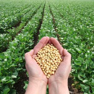 american Soybean