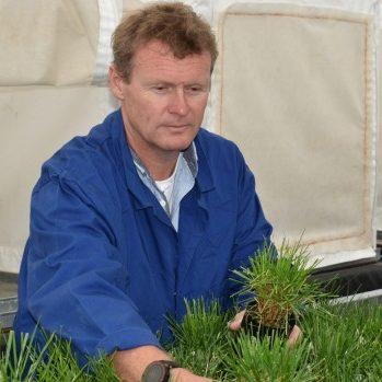 Methane-cutting GMO 'super-grass' could start new biotech crop debate in New Zealand