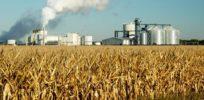 Corn Field Factory