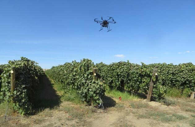 Drones and robots revolutionizing plant breeding, combating climate change