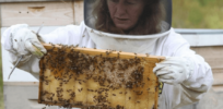 Massachusetts mulls restrictions on neonicotinoid pesticides over bee safety concerns