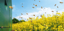 1 in 3 Scottish farmers blame ban of neonicotinoid pesticides for rapeseed crop damage