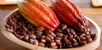Why Brazil's cocoa market crashed--and how genetics is reviving it