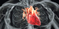 Regrowing heart muscles without cancer risk, using synthetic stem cells