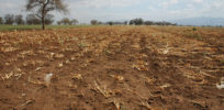 crop drought in tanzania