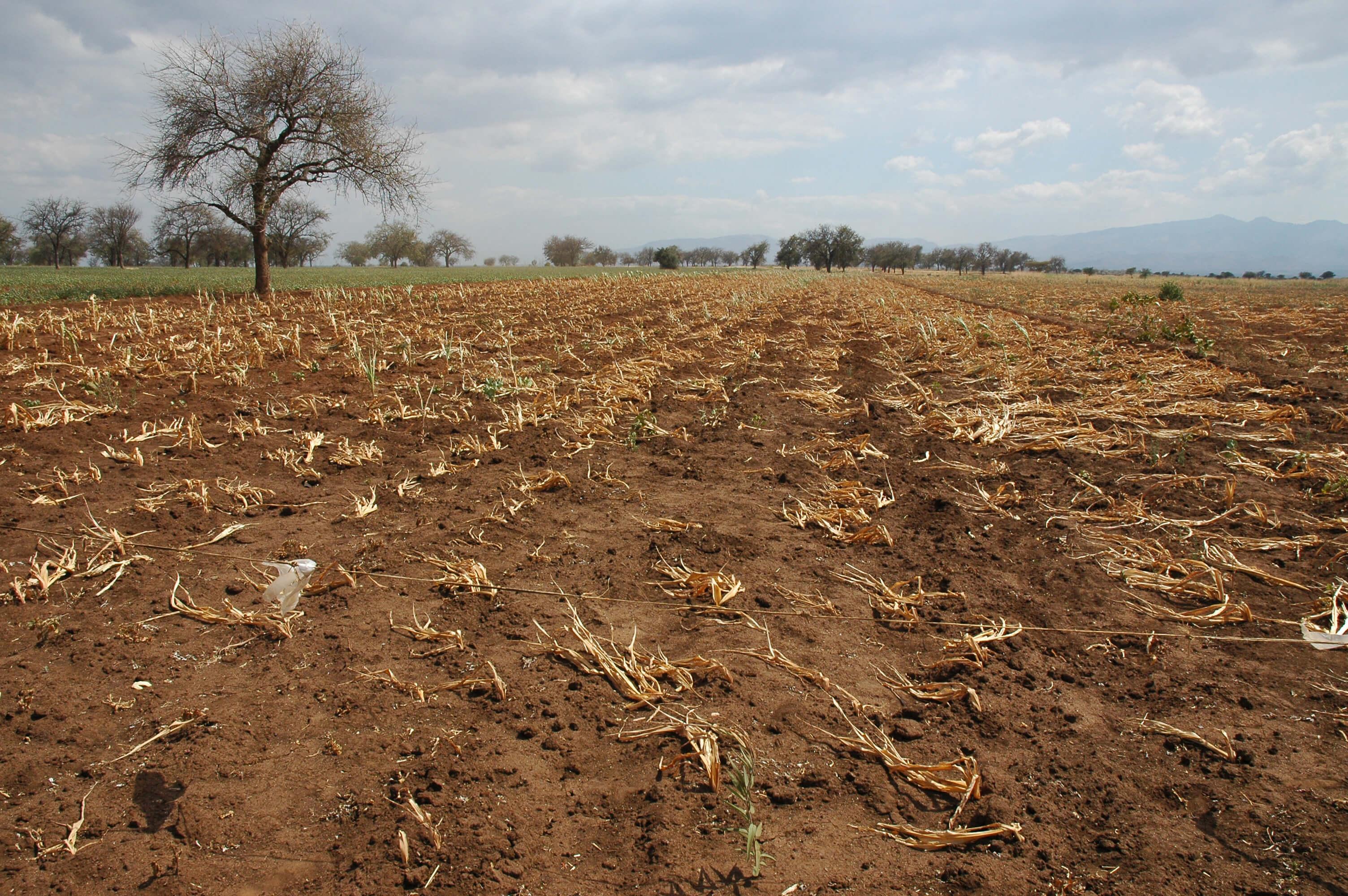 crop drought in tanzania