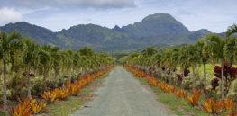 n HAWAII FARM x
