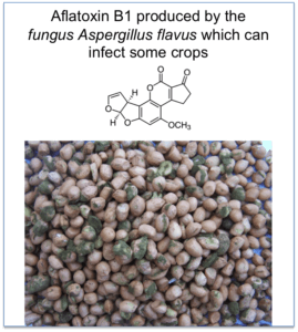 nature aflatoxin