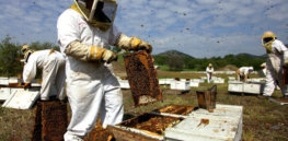 'Gold standard' assessing neonicotinoids: Field bee hive studies find pesticides not major source of health issues