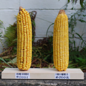 GMOexperiment