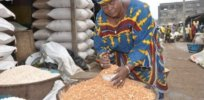Woman trader selling cowpea at Bodija market Ibadan Nigeria Photo IITA x