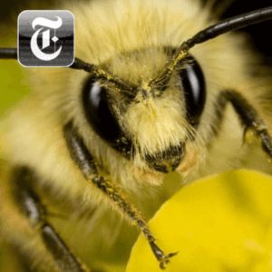 bee head on featured articles