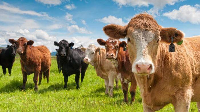 evaluate the trends affecting the cattle ranching industry 1 evaluate the trends affecting the cattle ranching industry prices and costs of beef are a trending issue in the industry and are varied with production.