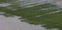 g wea flooding crops a grid x