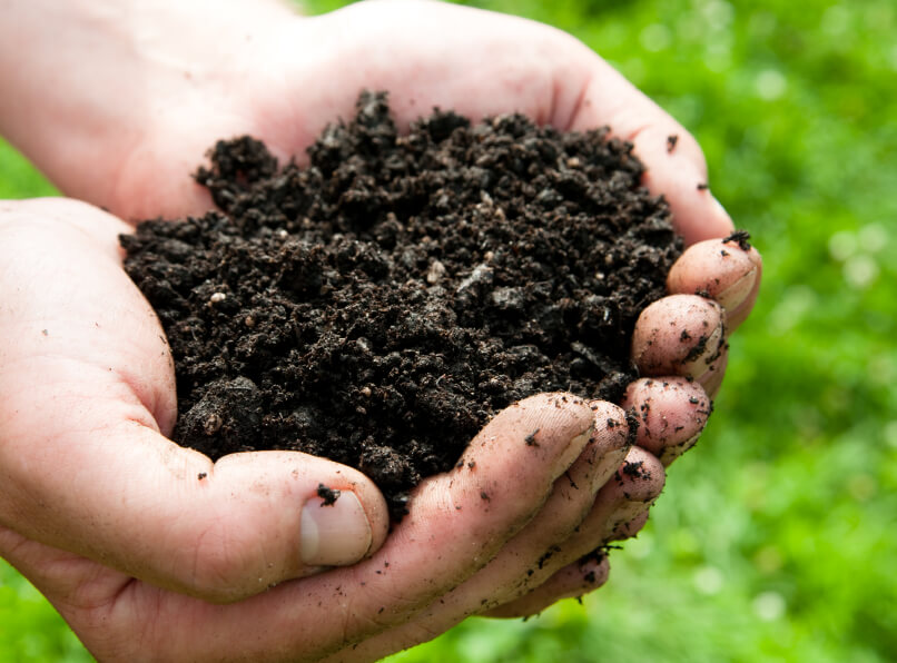 gardener holding dirt