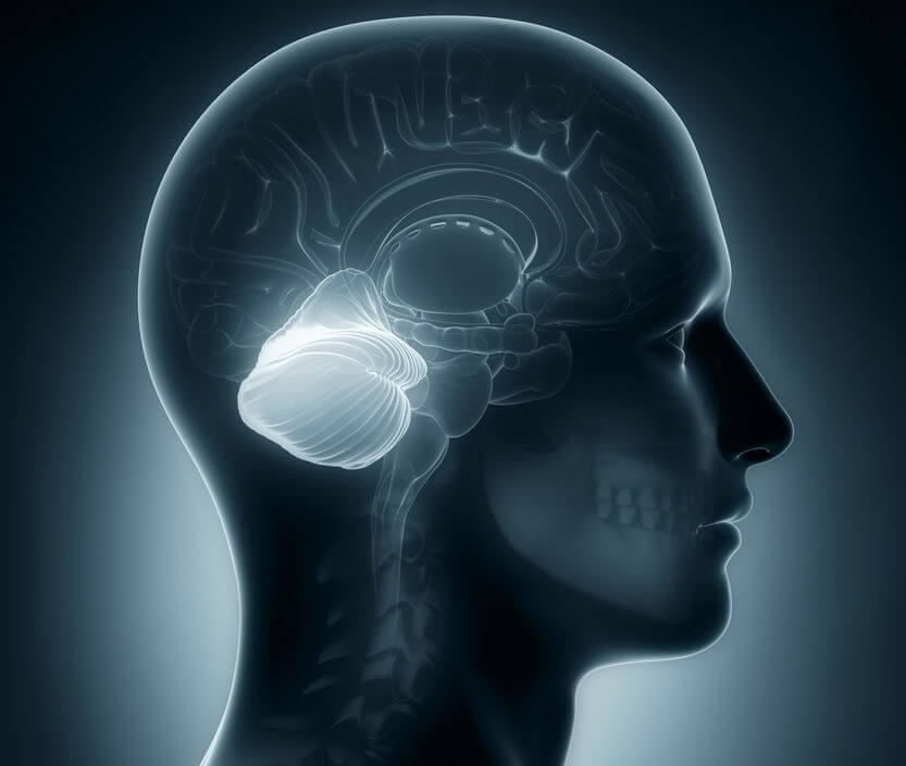 Image result for Neuroscientists have discovered a whole new role for the brain's cerebellum. It's long been assumed that the cerebellum functions largely outside the realm of conscious awareness, coordinating basic physical activities like standing and breathing, but it could actually play a key role in shaping human behaviour.