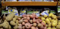 potato grocery x