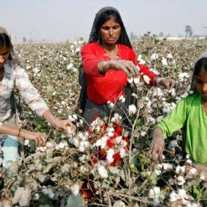 women cotton pickers find power in uniting over wages