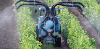 Will California break with EPA and ban chlorpyrifos pesticide?