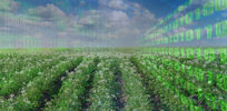 Agriculture's Big Data revolution increases efficiency, reduces food waste from farm to table