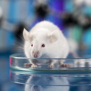 Glyphosate Mouse Study