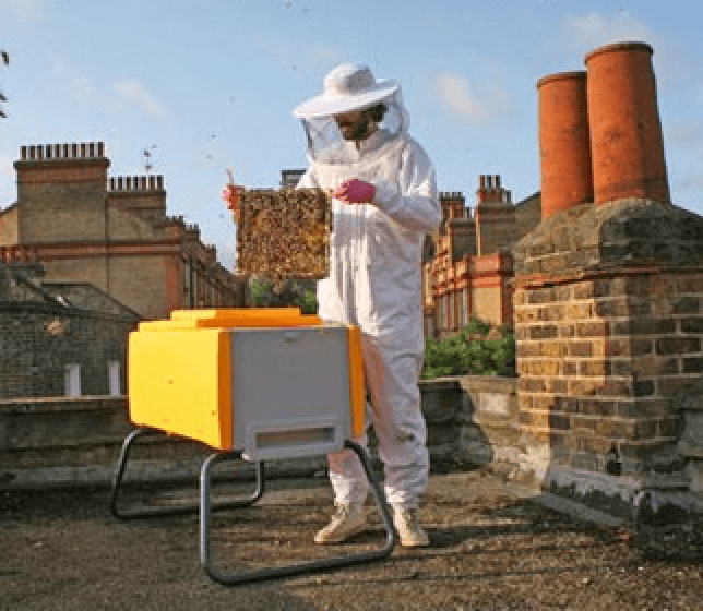 Hobbyist beekeeping practices and rejection of chemical treatments major driver of bee-killing Varroa mites and disease