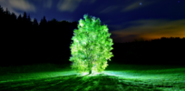 Glowing trees, no more colonoscopies and other wonders of synthetic biology