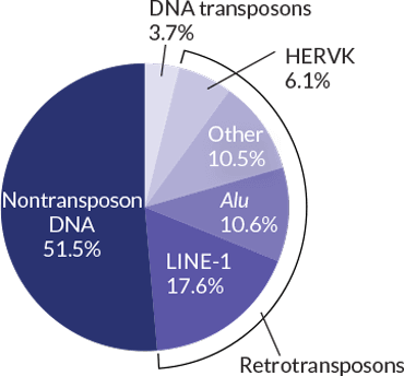 transposons inline