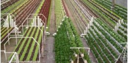 Talking Biotech: Can 'vertical farming' help feed world's growing population?