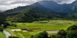 Opinion: Anti-GMO documentaries on Hawaii farming warp reality