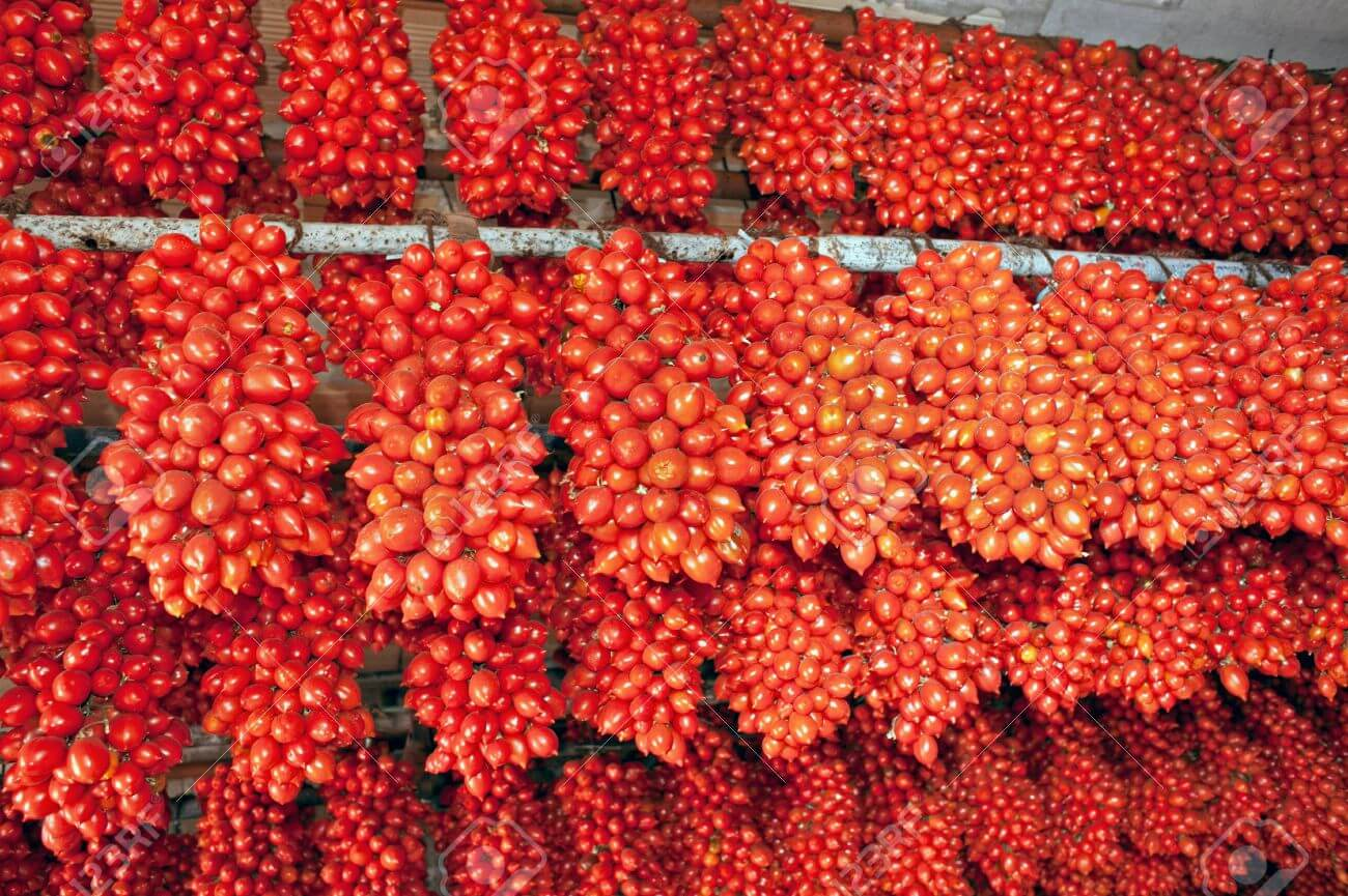Hanging bunches of typical tied Neapolitan cherry tomatoes called piennolo Stock Photo