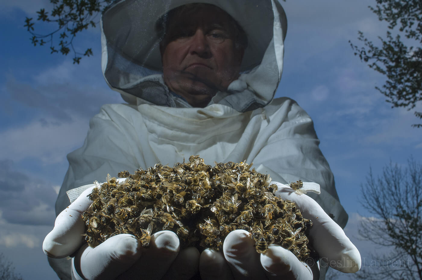 10 years after Colony Collapse Disorder scare, what have ...