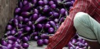 Market Bangladesh with brinjal eggplant