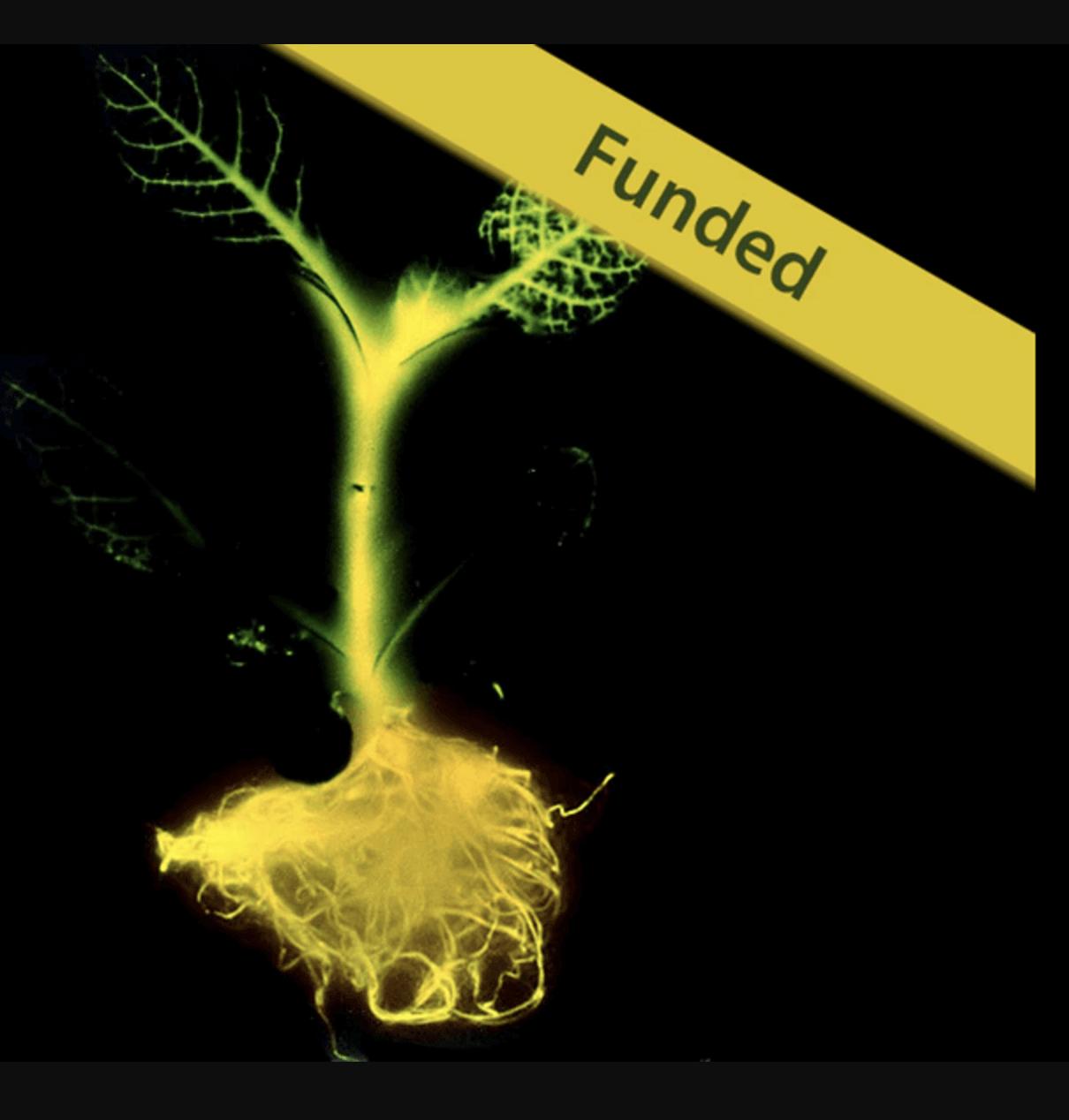 Glowing Plant's failed Kickstarter venture highlights pitfalls of synthetic biology