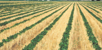 GMO sustainability advantage? Glyphosate spurs no-till farming, preserving soil carbon