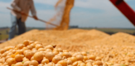 Talking Biotech: How Uruguay—major producer of GMO soy and corn—regulates GE crops
